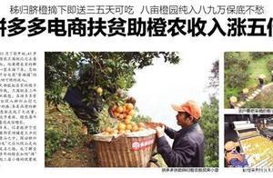 """中国脐橙第一村的触网伤心事——拼多多""""丰收节""""扶贫模式被指是商业噱头"""