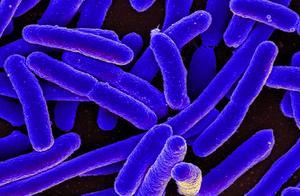 大肠杆菌超标,美国公司召回6万多磅生牛肉