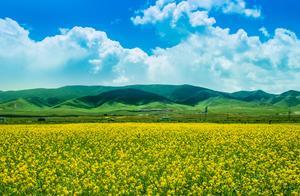 夏天旅游最合适的地方,青海湖:清爽又美丽