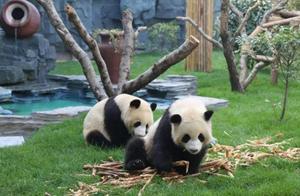 河南唯一有熊猫的动物园竟然在这个小县城,不在郑州,怎么回事?