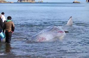 岛国奇葩操作:组织小学生观看杀害鲸鱼全过程