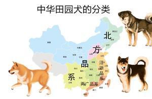 中华田园犬分类详解,三大品系各有千秋,前两种岌岌可危