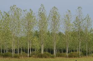 农田种树影响别人家的庄稼,怎么处理合适?