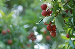 世界上最贵的7种水果,没吃过3种以上,都不好意思说自己是土豪