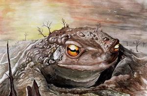 生物界的奇迹:在岩石中存活了六千多年的蟾蜍