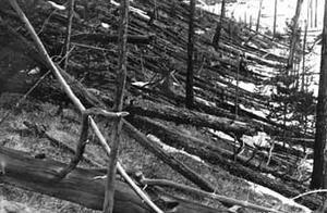 16公里高度空爆,8000万棵树应声倒下,始作俑者终于有点眉目了