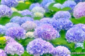 只有6月梅雨时节才能看到的绝美景色--东京的花季与雨季