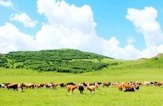 端午小放假,去张北坝上草原,这里有最美的塞外 风光