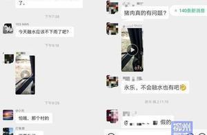网传广西融水发生猪瘟系谣言,造谣者已被警方依法处罚