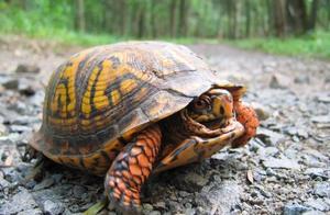 哪只是水龟?半水龟?陆龟?百分之七十的人都不完全认识