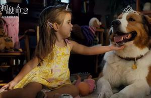 轮回延长狗狗生命,看《一条狗的使命2》哭成汪
