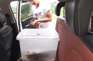 渔民小韩送活鱼去郴州丈母娘家,8个小时的车程,鱼会存活下了吗