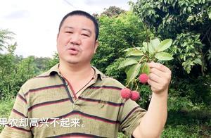 荔枝丰收果农愁坏了,五毛一斤没人要,掉了满地,消费者说吃不起