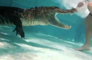 鳄鱼误闯人家的游泳池,主人请它出来,结果这货不肯走了!