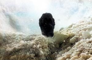 哥斯拉首次与怪兽大战,人类看完,用冰块把哥斯拉埋了