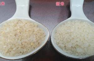 如何快速区分新米和陈米?米店老板教我绝招,学会再也不怕被坑了
