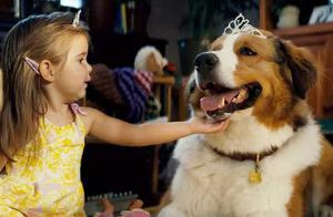"""《一条狗的使命2》催泪上映!被誉为炎炎夏日""""温暖的108分钟"""""""