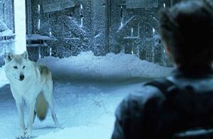 X战警2:狼叔雪山碰到真狼,两狼对视,还是狼叔更强一些