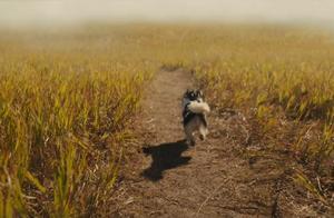 暖化了!《一条狗的使命2》正片片段,贝利伊森天堂重逢