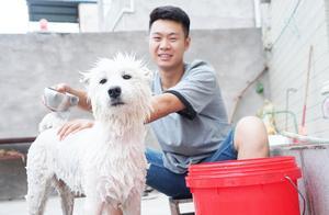 三石给萨摩耶洗澡,为了让狗狗听话,小八还要唱歌给它听