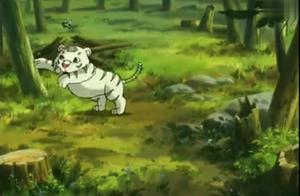 小虎还乡:妈妈去找食物了,小白虎一不小新被偷猎者抓住了,