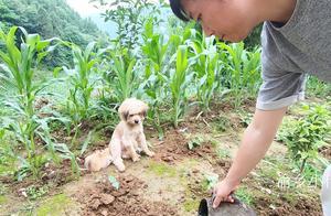 小代施农家肥,狗狗看着主人手里又黑又臭的东西,一副嫌弃的表情