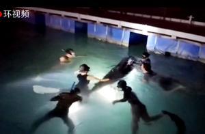 三亚搁浅领航鲸不幸死亡,志愿者曾24小时浸泡水中接力守护