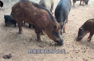 全世界最霸道的物种入侵,在中国被吃成濒危,吃货:这也叫泛滥?