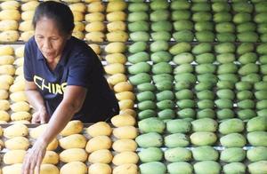菲律宾200万公斤芒果滞销,向中国发出求救后,这国却坐不住了