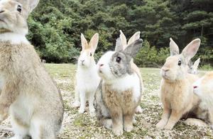 这种动物在国外泛滥,但在国内却不够吃,价格达到百元一只!