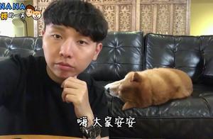 柴犬NANA的流浪朋友猫胖胖的病情说明来啦!