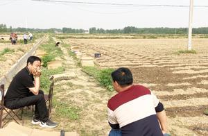 农村50岁大哥投资60万种植150亩楸树,2年能赚多少钱?听他怎么说