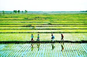 为什么中国不能学习美国的农业模式?专家说不行,有几点理由?