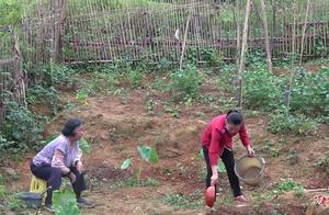 不忍心婆婆太辛苦,巧妇9妹帮她打理菜园,做好一个儿媳妇的责任