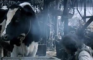 这电影都不用说黄渤演技多好!就凭奶牛的演技就打败多少小鲜肉!