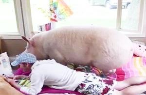 23岁男子不顾家人反对,疯狂爱上一头母猪,种种行为令人无法理解