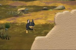 熊出没:肥波吃醋了,和猎狗争夺光头强的爱戴,强哥会选择谁呢