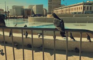 """""""大西洋的新娘""""摩洛哥卡萨布兰卡 这一次我们在鸽子广场"""