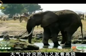 大象受伤了伤口严重感染,它的腿支撑不住自己的身体,十分可怜
