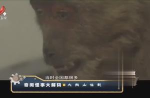 揭秘红毛野人真面目:大熊山森林深处 发现疑似野人的红色人影?
