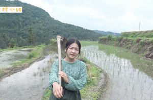 农村小纯:农村生活不易,辛辛苦苦摘的秧,一场暴雨就成这样了