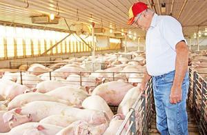 中国买家取消4513吨美国猪肉订单,美国103个农场破产,事情有进展