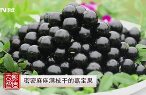 嘉宝果炖排骨,水果中的爱马仕!