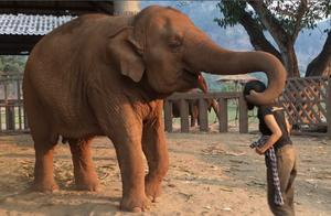 想让饲养员帮忙的大象,简直A到爆,各位见过这样的大象吗?
