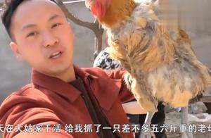 农村小伙给丈母娘抓只5斤重老母鸡,很肥美,岳父说给养着