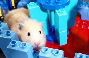 用乐高为仓鼠制作迷宫,一路畅通无阻,控制不住泛滥的母爱了!