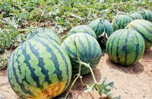 日本游客在成都买西瓜遭拒,水果摊老板:抱歉,不能卖