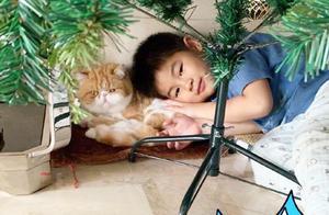 小鱼儿与猫咪玩耍 沙溢点赞:爱和小动物亲密接触