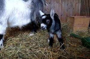 萌萌的小家伙,一只可爱的小羊宝宝