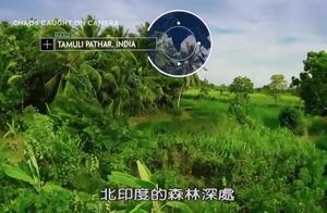 印度老虎攻击骑大象男子,高清完整版,终于找到了!